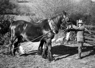 Throwleigh Archive