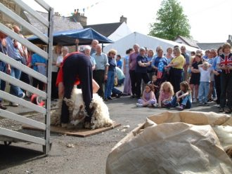 Sheep shearing at Jubilee exhibition