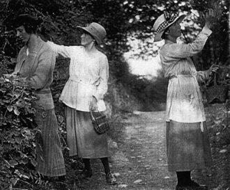 Blackberrying in Montgomeryshire c1920: Enid Lloyd-Morgan (later Varlow), Ceridwen Dilys Morgan and Margaret Gwenonwy Morgan (later Steele). Mwyara yn Sir Drefaldwyn c.1920: Enid Lloyd-Morgan (Varlow wedyn), Ceridwen Dilys Morgan a Margaret Gwenonwy Morgan (Steele wedyn).